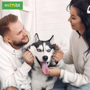 ANIMAX : Animalute ocupate si fericite