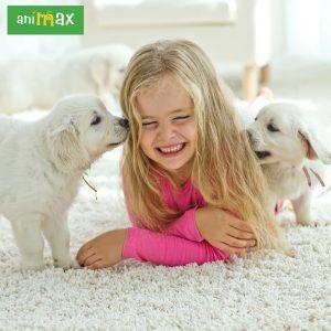 ANIMAX : Rasele ideale pentru copii